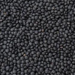 Šošovica čierna Beluga